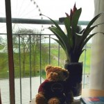 Aloysius Bear, COSI, client site visit to Hol Inn Plymouth